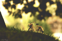 Paseos en primavera (A. del Campo) Tags: wood flowers parque light shadow espaa naturaleza flores verde green luz nature grass bike bicycle yellow garden lights luces spain woods nikon bokeh 85mm naturallight bicicleta sombra amarillo bosque desenfoque dreams bici nikkor jardn hierba luznatural nikond7000