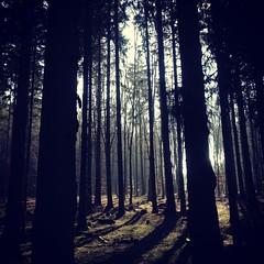 (moksimil) Tags: nature deutschland laub natur wald bergischesland wandern drausen iphoneography moksimil tippeltour300 vonommerbornnachwipperfurththier