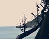 Donostia (Eneritz Olaizola) Tags: arbol mar sebastian sansebastian donostia zuhaitza itsasoa urgul pasenuevo