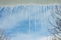 ice sickles (Fjola Dogg) Tags: winter snow ice iceland islandia pad sland 2012 snjr vetur icesickles md fjoladogg fjladgg