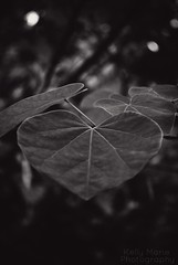 in my opinion.... (Photography by Kelly Marie) Tags: life bw love happy hope leaf heart god faith wide creator widely