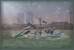 ~the rock bottom~ (itsjustme1340-Ress) Tags: seagulls galveston shrimpboat agreatdaywithmysister takenfromthebackofthefairyboat