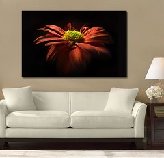 Stunning Beauty (Simply Canvas Art) Tags: art wallart flowerart homedecoration flowerprints flowercanvas flowerwallart flowercanvasprints flowercanvasart flowercanvaswallart