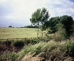 **This Wind is my friend (Livia Lazar) Tags: uk trees film mediumformat landscape countryside lancashire analogue britishcountryside fujivelvia 65mm mamiya7ii