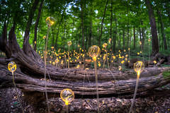 Alien Landscape (ADW44) Tags: philadelphia lights philly longwoodgardens kennettsquare sigma15mm canon5dmarkii brucemunro forestoflights
