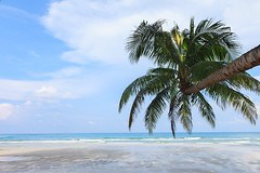 Coconut Tree on the beach (Patrick Foto ;)) Tags: trip travel blue sea summer vacation sky sun sunlight holiday tree beach relax asian fun thailand outside island happy bay sand couple colorful paradise quiet escape place time coconut outdoor style peaceful scene tourist fresh palm sunbath clear shore shade tropical destination tropic relaxation sunbathing each trad terengganu sunbathe trat kohkood kokut