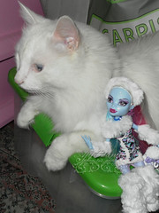 Abbey Bominable and the yeti cat ~ SAM2998_MonsterHigh_Abbey_ (applecandy spica) Tags: pink blue white abbey cat fur furry kitten chat doll soft purple kitty fluffy katze fatcat chubby yeti weiss gatto bianco blanc sparkling kittie ktzchen micio chaton gattino weis soffice peloso morbido gattone micetto micione gattochiatto monsterhigh abbeybominable