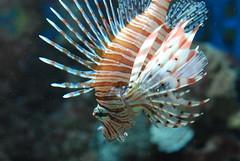 Fish! (OnceAndFutureLaura) Tags: sandiego acquarium birchaquarium scrippsoceanographicinstitute