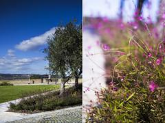 Per voi. Lass. (samy_flickr) Tags: flowers trees panorama sun alberi landscape italia fiori sole loreto marche