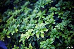 IMG_4836 (ExceptEuropa) Tags: street city usa plant color tree green fall alexandria 50mm virginia dc washington 14 va vegetation 2012 canon5dmarkii