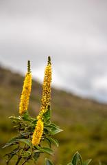 Flowers (losacchi) Tags: travel brazil mountain minasgerais brasil trail espiritosanto picodabandeira manhumirim altodocapao altodojequitiba