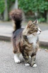 DSC_0010_edited-1.jpg (Aralia photos) Tags: cats animal animals cat feline felines elementsorganizer11