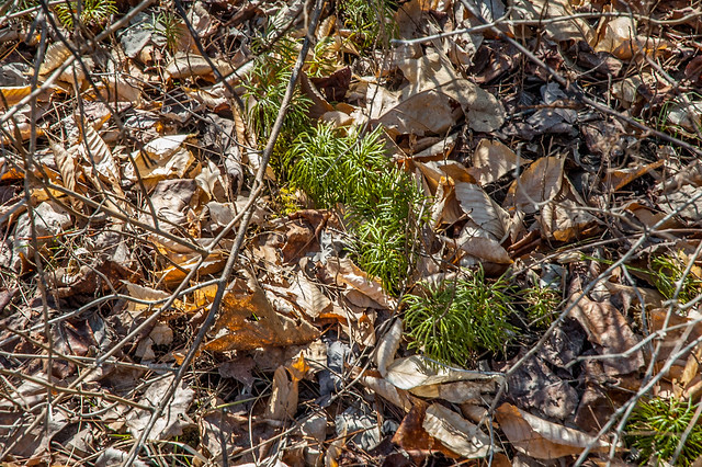 Follow the Watershed Ecotour - Hoosier National Forest - Club Moss - March 21, 2014