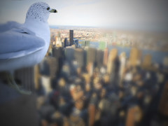 A better tomorrow (alternate version) (Howard L.) Tags: seagulls collage photoshop canon hope flying manhattan skylines abettertomorrow howd multipleimages alternateversion oaklandlake 135mmf2 oaklandgardens 5dmiii howardlaudesign proudwanderer