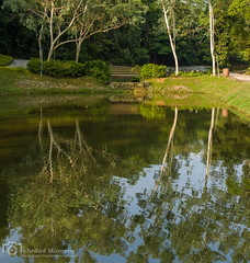 Trees in water (mtux) Tags: road park trees lake reflection si greenery smcpentaxda35mmf24al