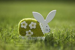 Happy Easter Everyone from the Magdalen Green Photography Easter Bunny - Dundee Scotland (Magdalen Green Photography) Tags: green easter scotland dof dundee f14 85mm scottish easterbunny happyeaster 7400 happyeastereveryone magdalengreenphotography pagesmagdalengreenphotography313717755372908