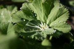 Wassertropfen (nini.mii) Tags: rain regen tropfen