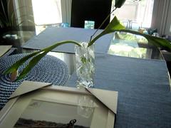 First aid (miz bee) Tags: tulips mixture limp