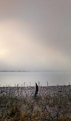 sticks (Peter & Olga) Tags: fog sunrise sticks may spencer 2016 d810 olgabaldock hawhesburyriver