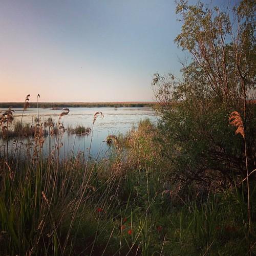 Родные места встретили нас утренней свежестью, дымкой над водой и глупой чайкой, которую мы повстречали на пути. #ukraine #kuhurlui #adventure #nature   #home