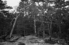 2016-April-23th_Porkkala_Yashica-Electro_048 (Tatu Korhonen) Tags: finland kirkkonummi porkkala yashicaelectro35professional yashinondx1745mm