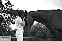 Bond (Sammi Celleste Photography) Tags: summer portrait blackandwhite horse blackwhite photoshoot bond equestrian equine blackandwhitephotography petportrait petphotography 18300 18300mm equestrianphotography horsephotography
