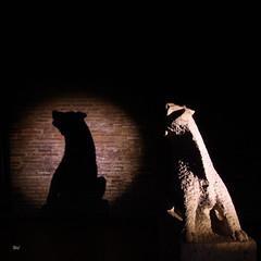 "gargouille 026 (""wil"") Tags: light lightpainting black wil noir muse toulouse gargouille toulouselightpainting wil4416 lightpaintingtoulouse wilfriedivanes musedesaugustinstoulouse musephotoprsentation nuitdesmuses2016"