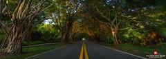 Florida Life: Bridge Road (Thncher Photography) Tags: nature landscape outdoors florida sony scenic stuart fullframe fx martincounty bridgeroad treecanopy hobesound banyantrees palmcity southeastflorida zeissfe1635mmf4zaoss a7r2 ilce7rm2 sonya7r2