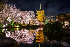 (DSC_2642) (nans0410(busy)) Tags: reflection tower japan cherry outdoors scenery kyoto   sakura nightview kansai  toji      easttemple kinkiarea