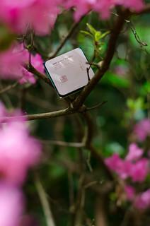 Athlon X4 880K in Flowers