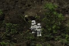 Ewok Hunt (LegoLee) Tags: starwars lego ewok stormtrooper bradbury endor