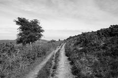 Exmoor ([Richard Ford]) Tags: trees landscape moors dunster moorland exmoor 2016 webberspost