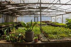 Viveiro-5 (Secom UnB) Tags: plantas jardim prc antonio jardins estufa prefeitura viveiro mudas antnio jardinagem campusdarcyribeiro