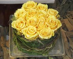 Labt, wie ihr wollt, werft Blumen her (amras_de) Tags: flower fleur rose flor rosa roos blomma rosen gl blume fiore blte blomst rs rozen virg lore bloem blm iek floro roser kwiat flos ciuri kvet arrosa kukka rozes cvijet vrtnica flouer blth cvet zieds ruusut is trandafir floare rza rua rzsa blome rozo iedas roe rue rosslktet
