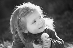 IMG_5227bw (eingefangen) Tags: blackandwhite bw chickens easter toddler chicks