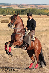 Jinete alzando (O_Prieto) Tags: horses espaa horse les caballo caballos oscar spain amazon with danse leon rider jinete espagne con avec bailando amazona dances prieto chevalchevaux chevauxl