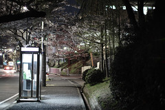 Telephone Box (halfrain) Tags: street city flower japan night cherry 50mm town sigma busstop cherryblossom sakura telephonebox merrill foveon sigma50mm someiyoshino sd1 yoshinocherrytree sigma5014 sigma50mmf14  sd1merrill