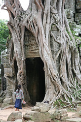 Tree Roots Clad Angkor Temple Complex Siem Reap Canbodia (eriagn) Tags: travel trees beauty stone mystery temple ancient asia cambodia southeastasia roots documentary angkorwat worldheritagesite explore jungle experience mysterious siemreap angkor ancientcivilization treeroots discover travelphotography flickrtravelaward hewedstone