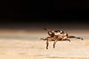 Hanging Out - Oriental Beetle (Matt's Workshop) Tags: summer macro art glass night bug insect photography photo nikon exposure foto fotografie arte nocturnal beetle oriental depth 2012 magnifying fotografía exposición mattmurphy flickraward d40x