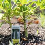 Rehoboth Teaching Garden | 2012-06-24  12-57-34 thumbnail
