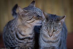 Lanai-cat-sanctuary-294.jpg (ThePlanetD Travel Blog) Tags: usa hawaii lanai catsanctuary