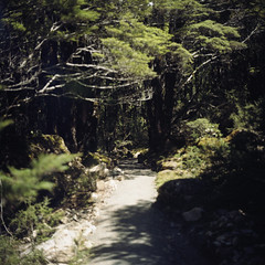 (*YIP*) Tags: newzealand mountain tree 120 6x6 film nature grass forest mediumformat square landscape outdoors photography leaf nationalpark bush woods day kodak arthurspass nopeople growth southisland epson wildflower kiev idyllic scenics freshness mountainrange tranquilscene kiev60 yip arthurspassnationalpark iso160 traveldestinations colorimage v500 beautyinnature uncultivated yipchoonhong