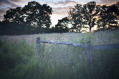 (drfugo) Tags: wood flowers sunset cloud sun field grass forest fence sussex lomography lofi meadow canon5d thistles ardingly ardinglyreservoir helios44258mmf20