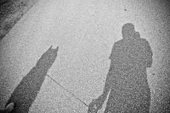 DSCF4001 (/\lex) Tags: shadow dog husky batdog