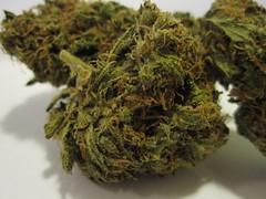 Triple Deisel (Everything About Marijuana) Tags: red high eyes weed cancer smoking medical pot khalifa celebrities bud marijuana sativa cures wiz pineappleexpress indica everythingaboutmarijuana