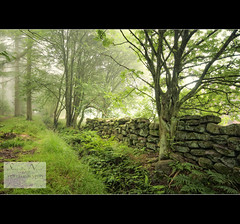 The wee wall in the woods (Samantha Nicol Art Photography) Tags: trees mist green nature fog wall woods branches samantha cropton nicol