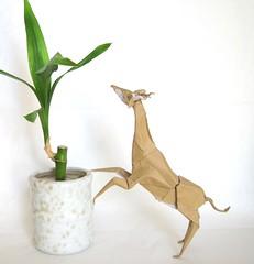 Gerenuk 1.1 (folding~well) Tags: africa paper origami antelope folding gerenuk