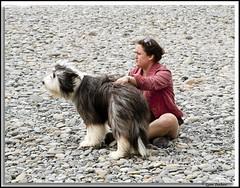 Facing down the wind (walla2chick) Tags: woman dog washington pebbles wa rubybeach olympicnationalpark dogowner 2955 hairydog