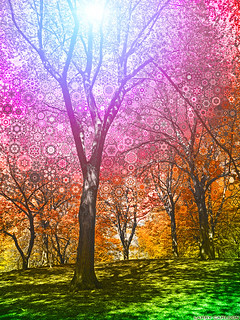 LARRY CARLSON, The Wonder Tree, digital chromogenic print, 18x24in.,2011.