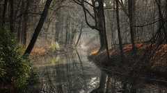 The Spirit of the Forest (Paul Beentjes) Tags: park trees mist netherlands fog forest sunrise reflections lumix nevel bomen stream estate nederland panasonic bos f28 dmc 1235 vario overveen landgoed reflecties elswout zonsopkomst gh3 beekje buitenhuis 1235mm